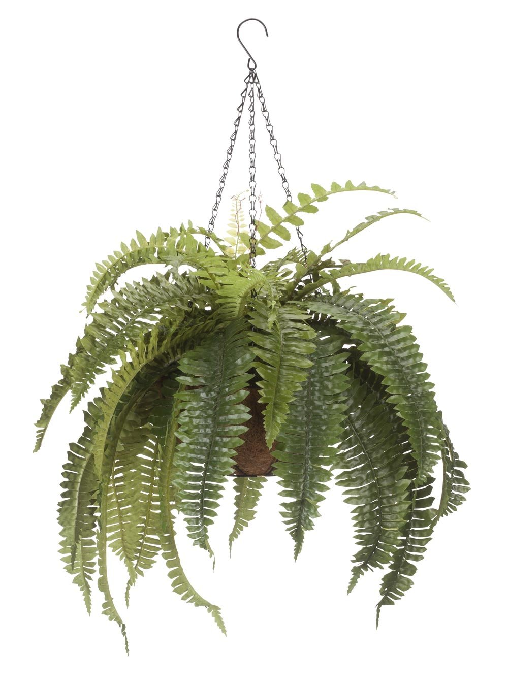 Miles Kimball Fully Assembled Fern Hanging Basket by OakRidge OutdoorTM