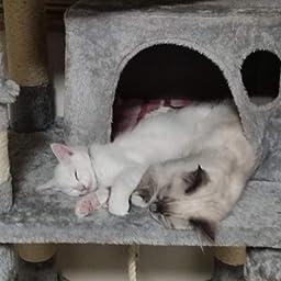 Amazon Feandrea キャットタワーねこタワー 巨大サイズ 太さ爪とぎ柱 大型猫 運動不足対応 多頭飼い Npct99w Feandrea キャットタワー 通販