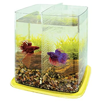 ICA PT073B Bettera Betta Battle Paradise, Amarillo: Amazon.es: Productos para mascotas