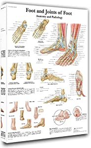 Room Wall Pictures Anatomy and Pathology Pictures joints of foot Paintings 1 Piece Canvas Wall Art Modern Artwork Home Decor for Living Room Framed Gallery-wrapped Stretched Ready to Hang(16''X24'')