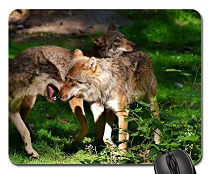 77f56739debad Amazon.com : Mouse Pad - Wolves Wild Animals Forest Young Animals ...