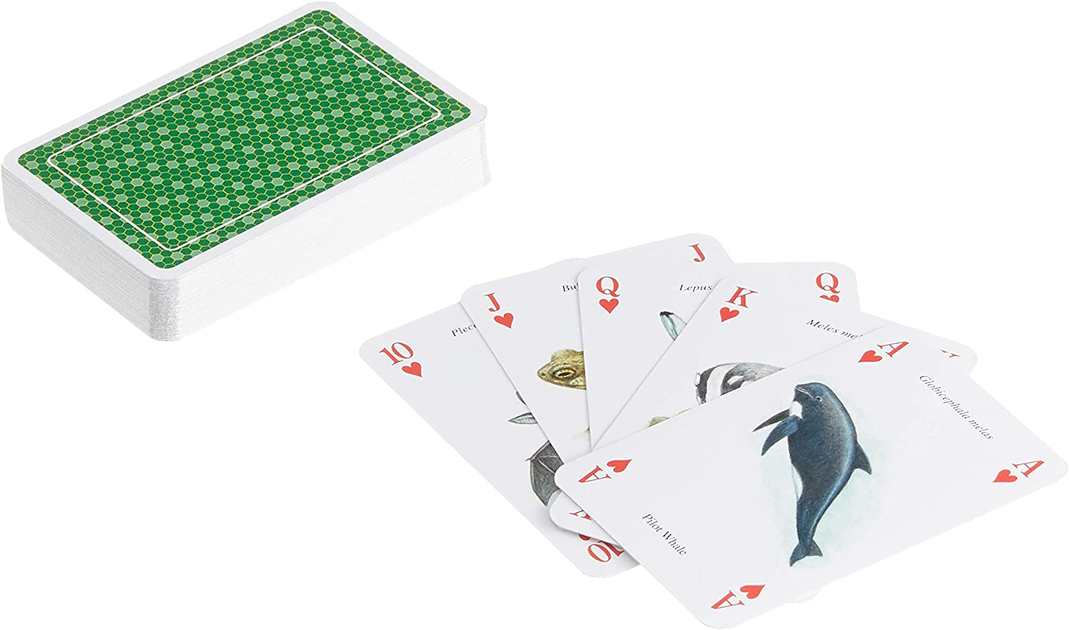 Heritage Playing Cards Educational Reptiles /& Amphibian