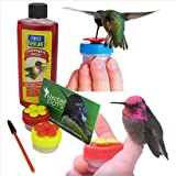 Hand held Hummingbird Feeder Kit- Everything You Need to Hand-Feed Hummingbirds with Instructions