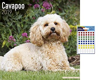 iPosters Bundle - 2 Items - Cavapoo 2019 Wall Calendar - Closed Size