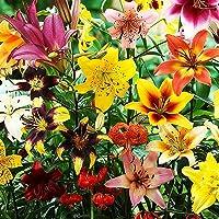 10x Lirios bulbos mix Bulbos de flores exterior Bulbos de lilium Lirios plantas Flores para plantar