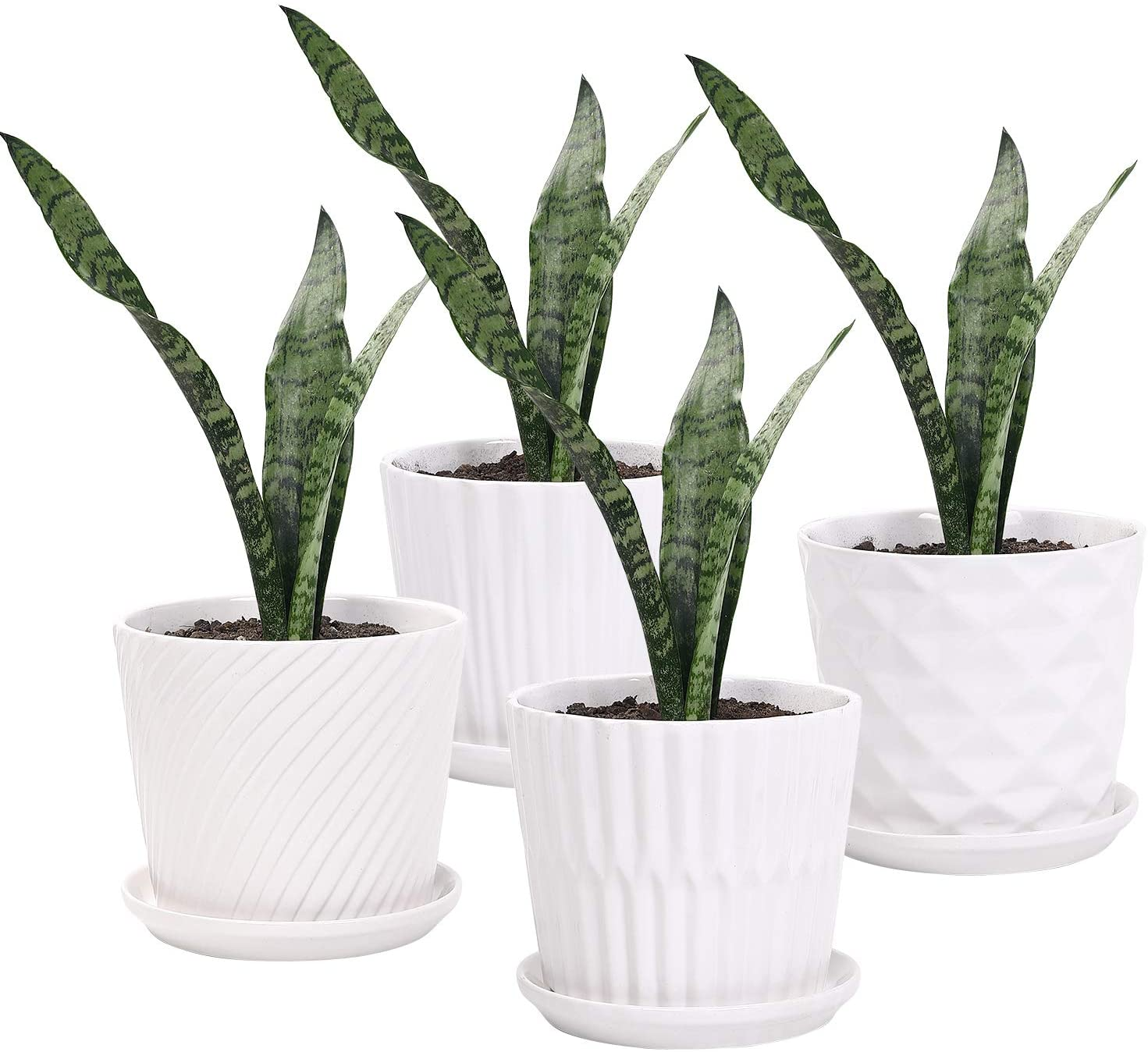 Amazon Com Plant Pots 5 5 Inch Cylinder Ceramic Planters With Connected Saucer Pots For Succuelnt And Little Snake Plants Set Of 4 White Garden Outdoor