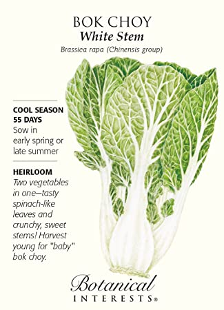 Amazoncom White Stem Bok Choy Seeds 15 Grams Brassica Bok
