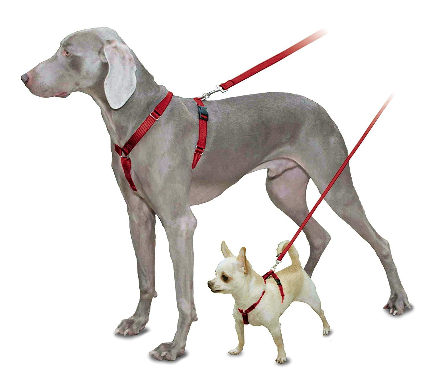 PetSafe Sure-Fit Harness, Adjustable Dog Harness from the Makers the Easy Walk Harness