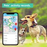 PETFON Pet GPS Tracker for 1-3 Dogs Pets,No Monthly Fee,Real-Time Tracking Device,Activity Monitor