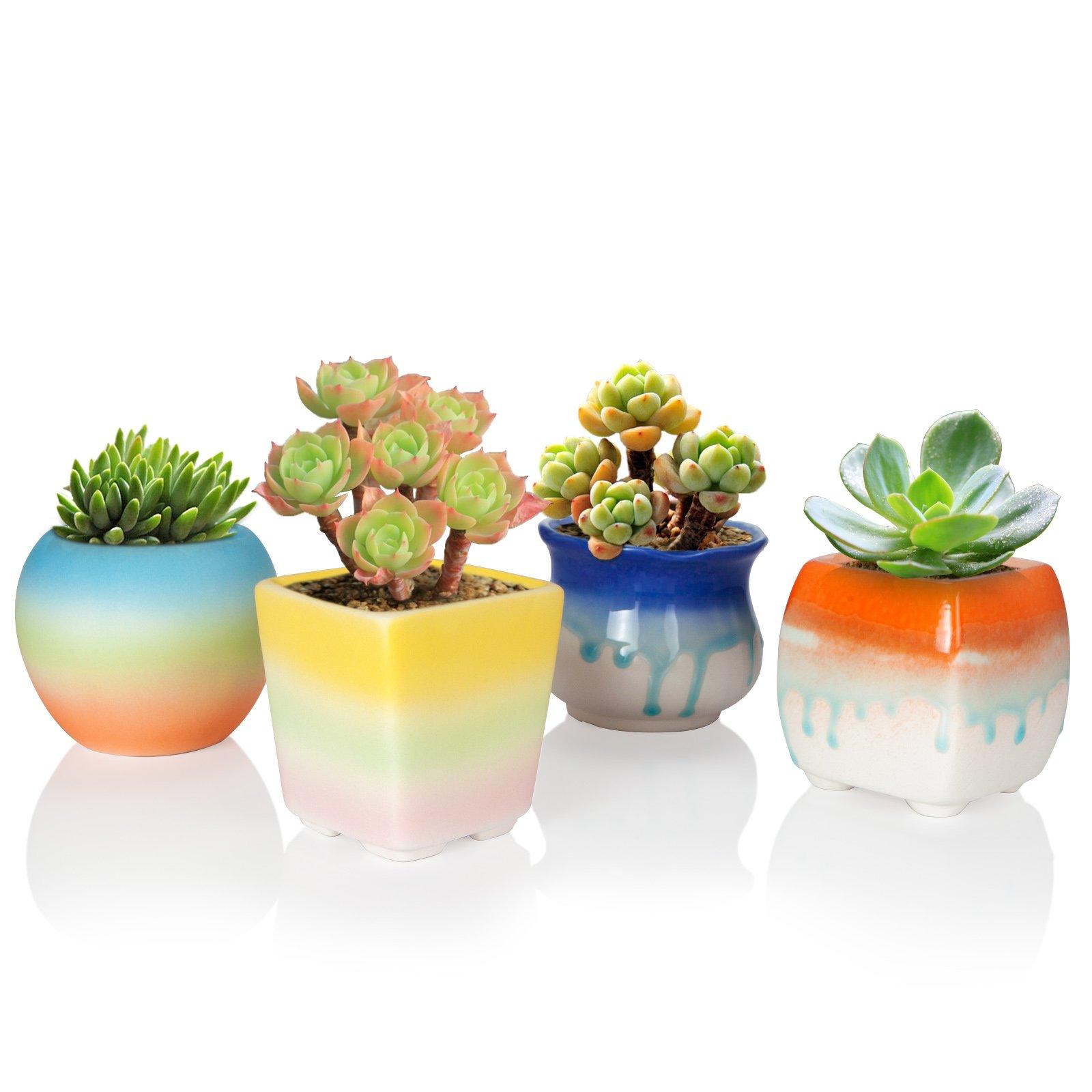 Solofish Succulent Plant Pot, Set of 4 Cute Rainbow Ceramic Pot Cactus Plant Pot Colorful Indoor Outdoor Garden Balcony Bucket Container Planter (Plants are Not Include) (Mini Size Pots Set) by Solofish