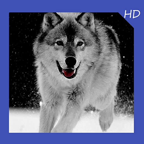 Amazon Com Wolf Wallpaper Hd Free Appstore For Android