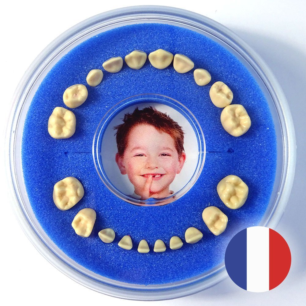 Firsty Round Baby First Tooth Box (blue, boy) ABF Français (Boîte à Dents de Lait) Lumage