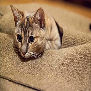 Somedays - Alfombrilla para Perros y Gatos para Entrenamiento de Gatos y Gatos, promueve Habilidades Naturales de forraje: Amazon.es: Productos para ...