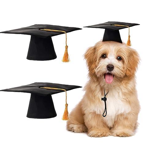 2 Unidades de Gorras de Mascotas de Graduación Perro Pequeño ...