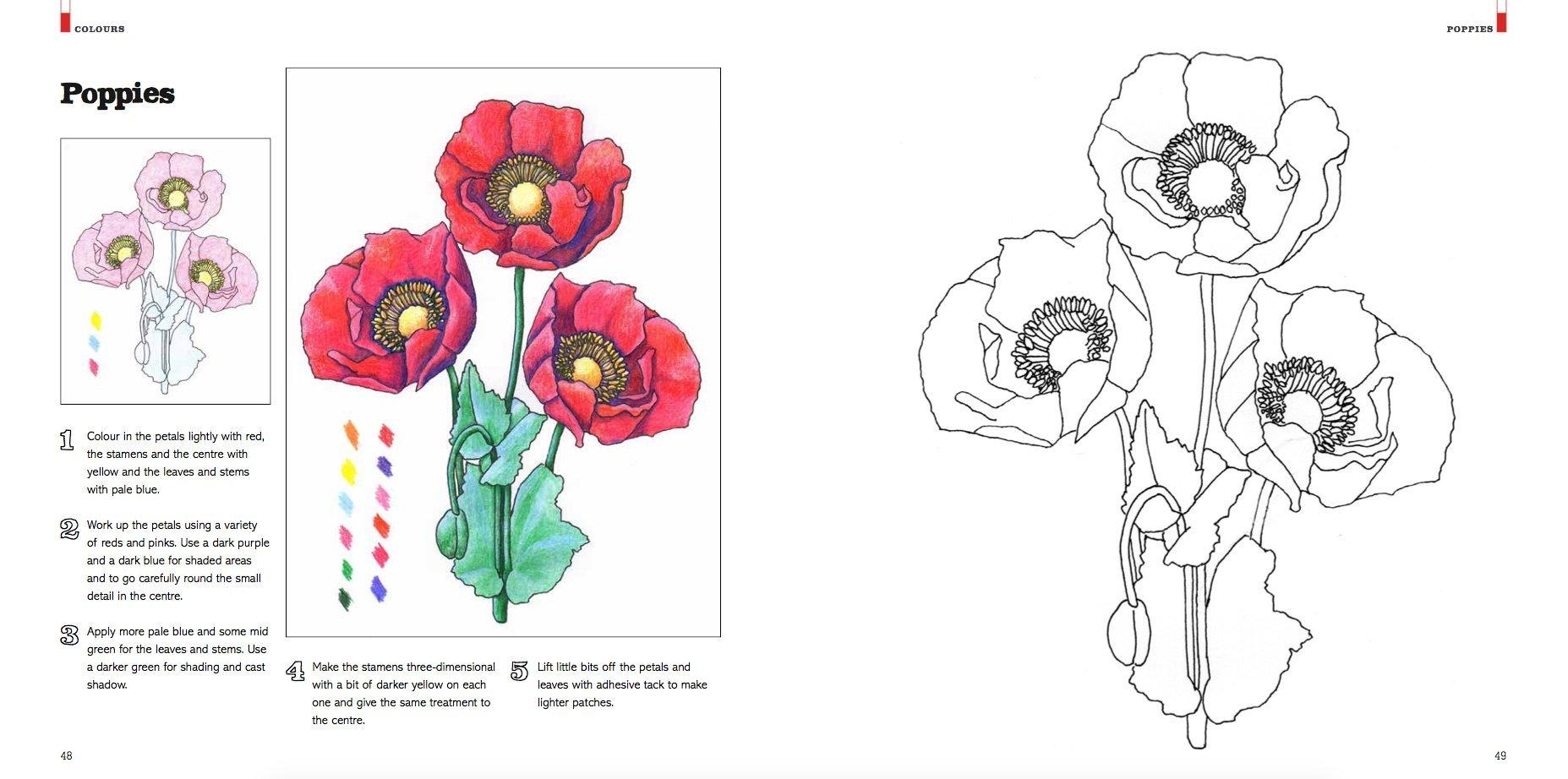 Masterclass In Colour A Colouring Workbook Of Techniques And Inspiration Meriel Thurstan Rosie Martin 9781849944250 Amazon Books