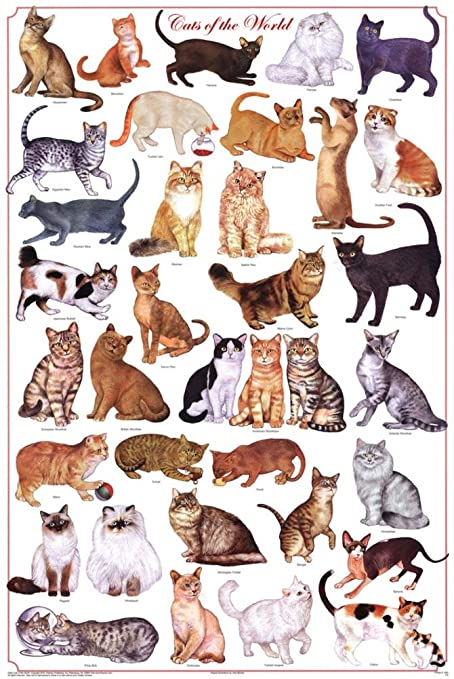 Amazon com laminated cats of the world educational science chart
