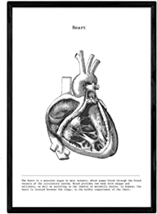 Nacnic Prints Heart Human Body Anatomy - Set of 1 - Unframed 11x17 inch Size - 250g Paper - Beautiful Poster Painting for Home Office Living Room