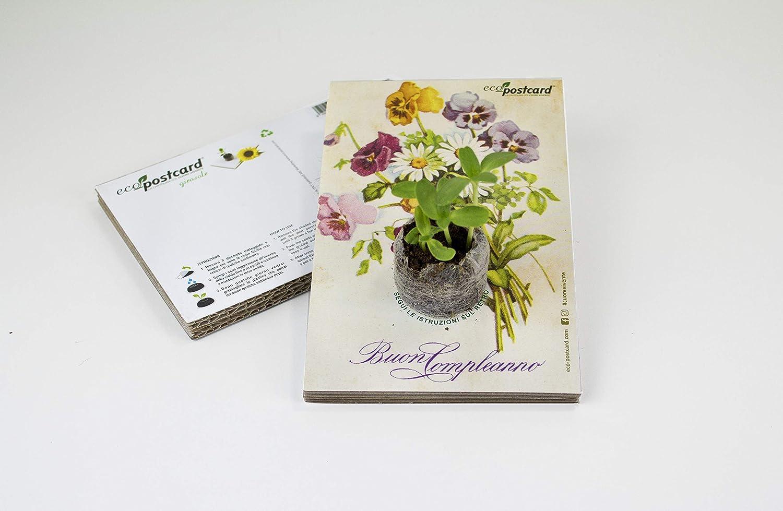 Mazzo Di Fiori Van Gogh.Eco Postcard Buon Compleanno Con Mazzo Di Fiori Vintage Amazon It