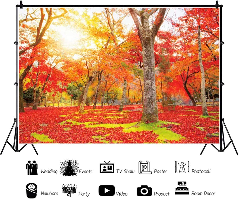 OERJU 10x8ft Fall Nature Backdrop Maple Leaves Spread on The Ground Sunshine Lawn Old Trees Photography Background Holiday Vacation Boys Girls Adults Portrait Photo Studio Props Vinyl Wallpaper