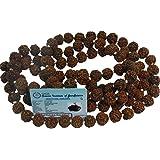 Maalavya Wooden 5 Mukhi Rudraksha Mala, Small, 12mm Beads with Certificate