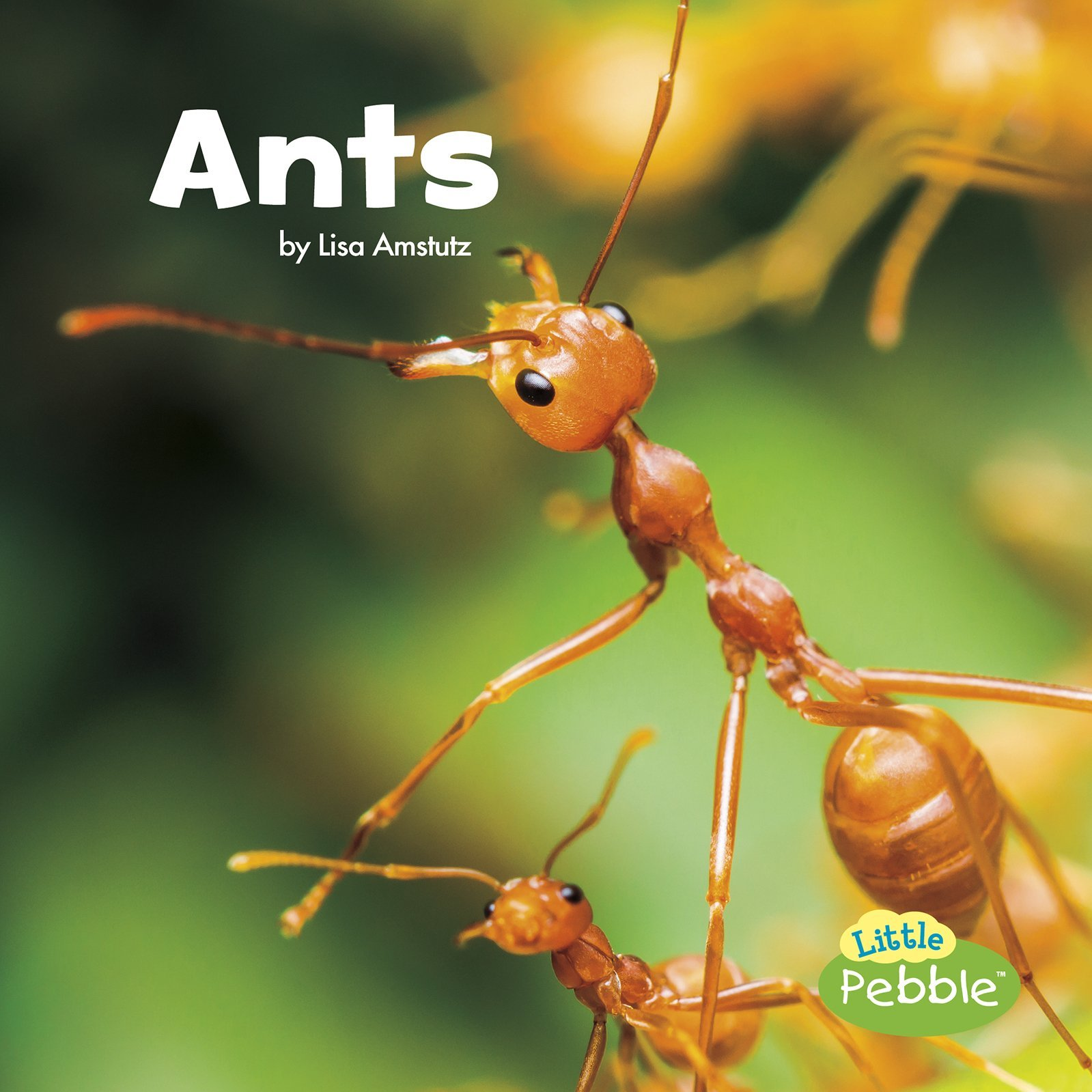 Ants (Little Critters): Amstutz, Lisa J.: 9781515719403: Amazon ...