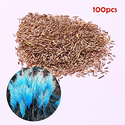 Oliote Colorful Pampas Grass Seeds Home Garden DIY Plants Easy Grow Dresses : Garden & Outdoor