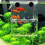 EFORCAR 1 stücke Fischzucht Boxen Doppel Guppies Schlüpfen Inkubator Isolation Acryl Mini Aquarium Tanks Durable