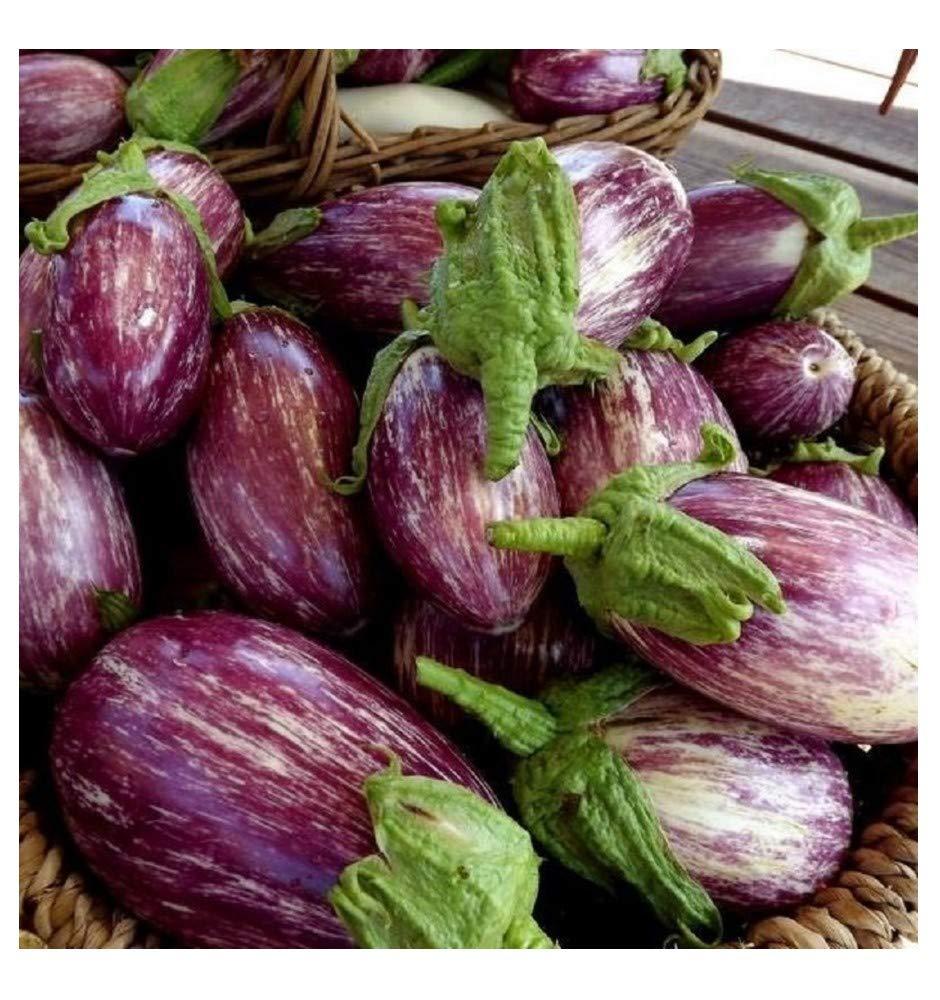 Aubergine - LISTADA DE Gandia - 250 Finest Seeds