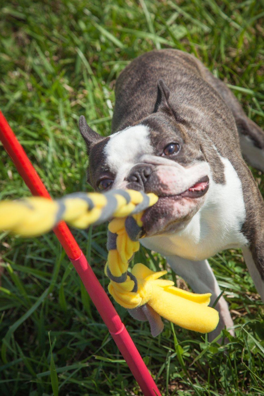Tether Tug Interactive Dog Rope Toy (BIG (75-175lbs))