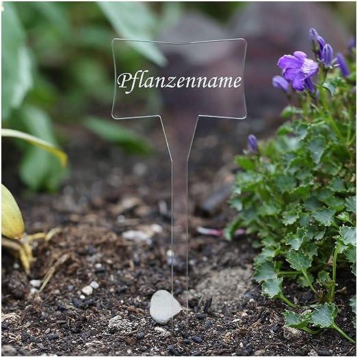 Acrílico cristal – Etiquetas para plantas (Esclavo transparente – Jardín Conector, hierbas letreros, Planta, conector – Selección + Nombre Personalizado, Stevia: Amazon.es: Jardín
