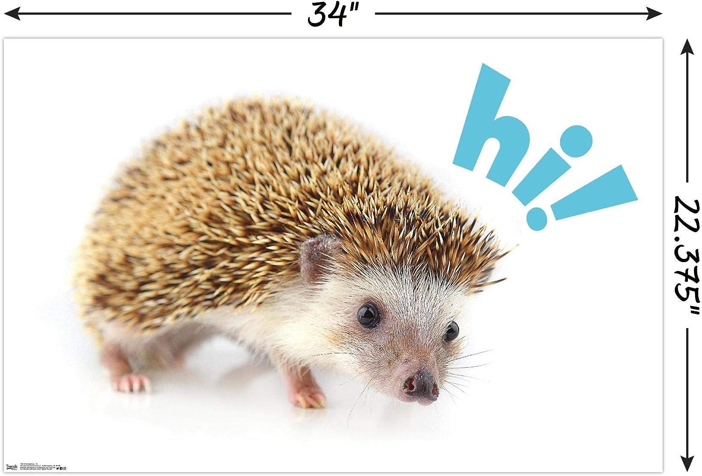 Amazon Com Trends International Hedgehog Hi Wall Poster 22 375 X 34 Posters Prints