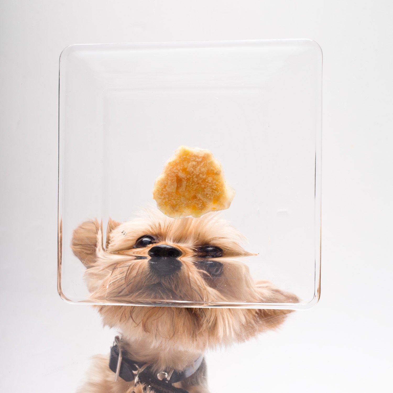 Amazon.com : HARTZ Delectables Stew Lickable Wet Dog Treats ...