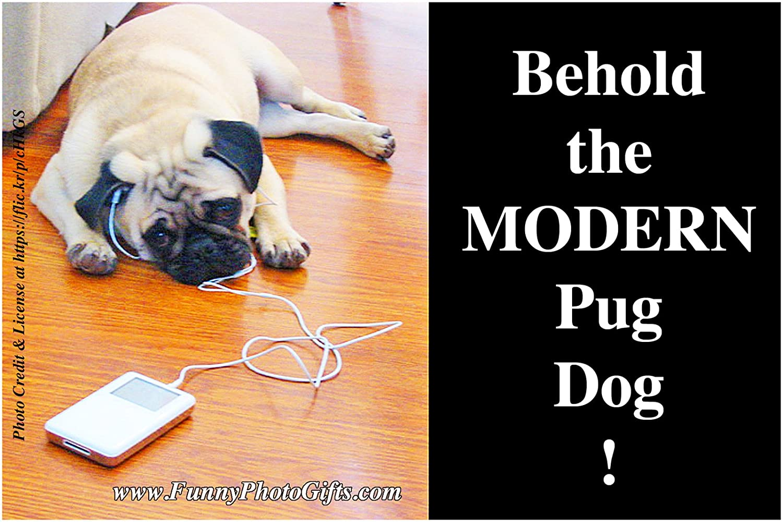 Funny Dog Humor Pug Refrigerator Magnet  NEW