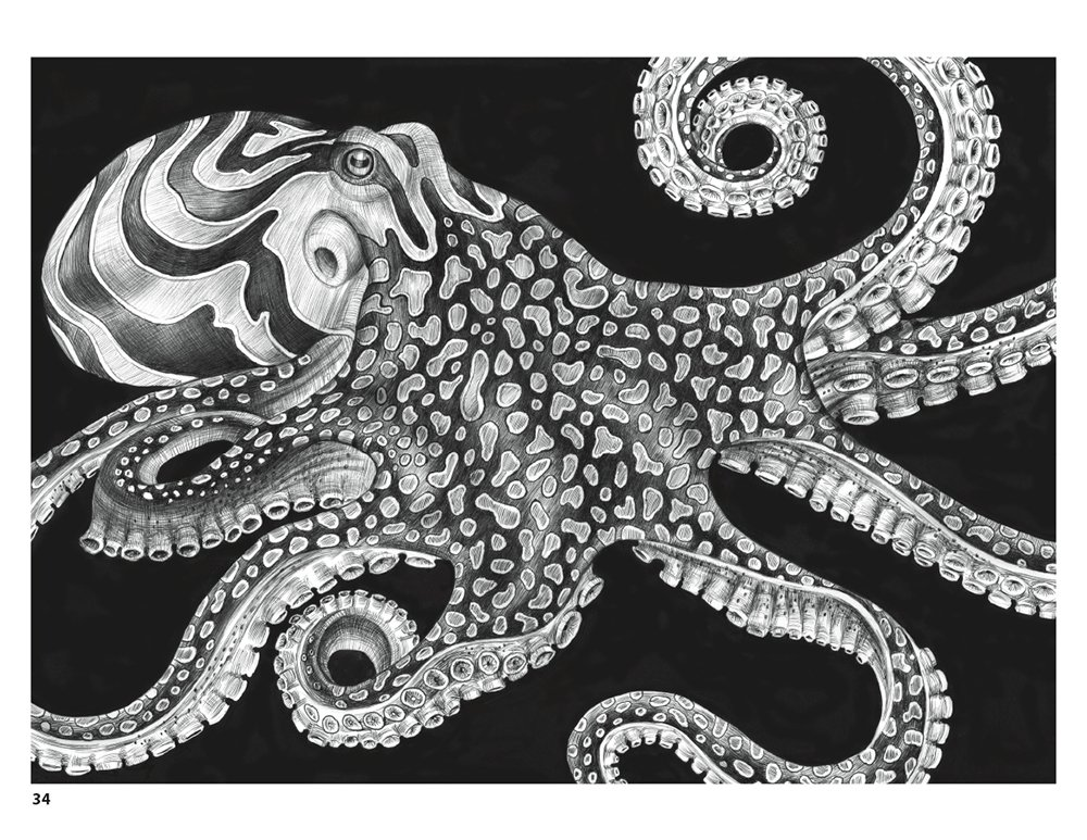 Animorphia Coloring Book Download Amazon Intricate Ink Animals In Detail