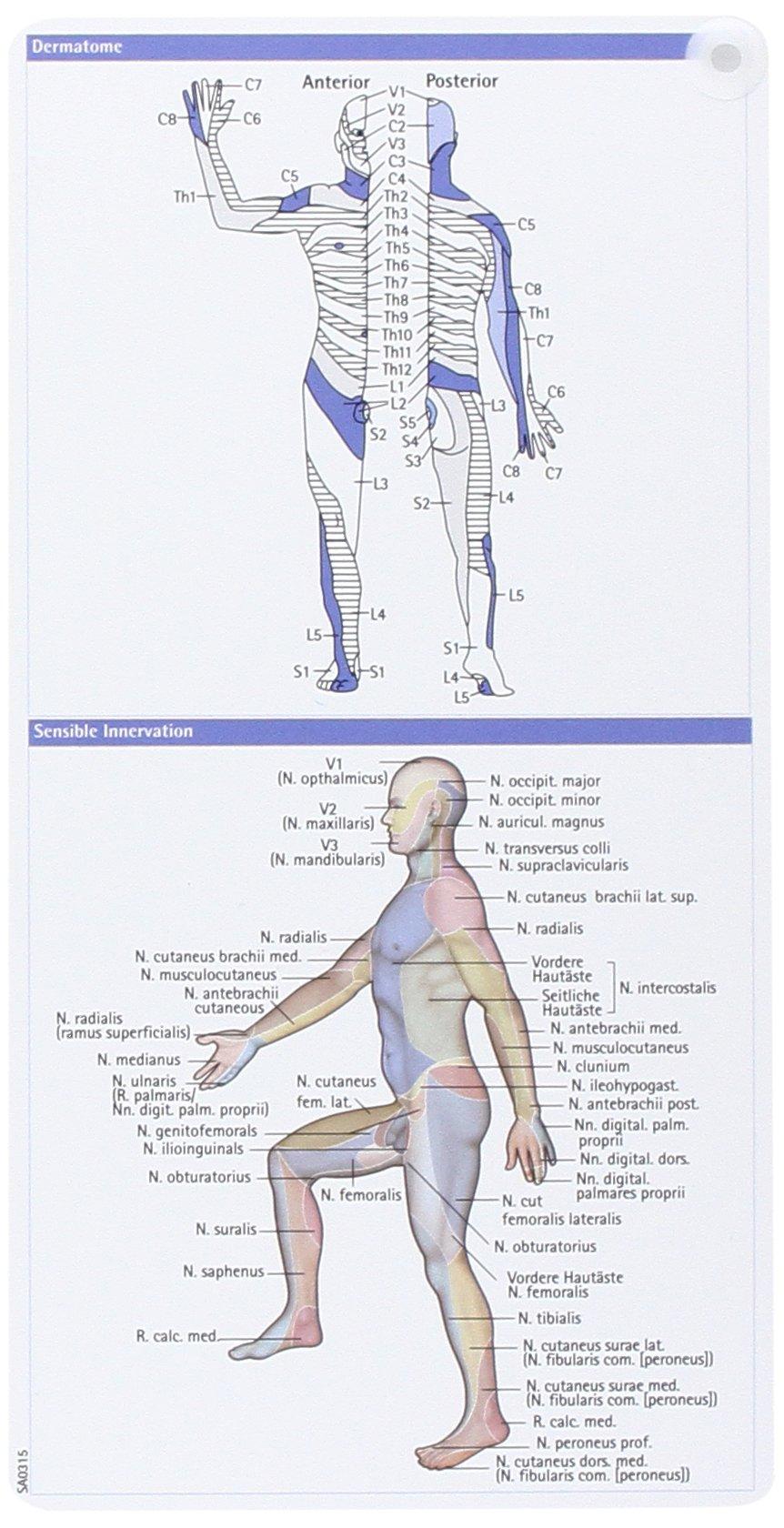 Neurologie pocketcard Set: 9783898621809: Amazon.com: Books