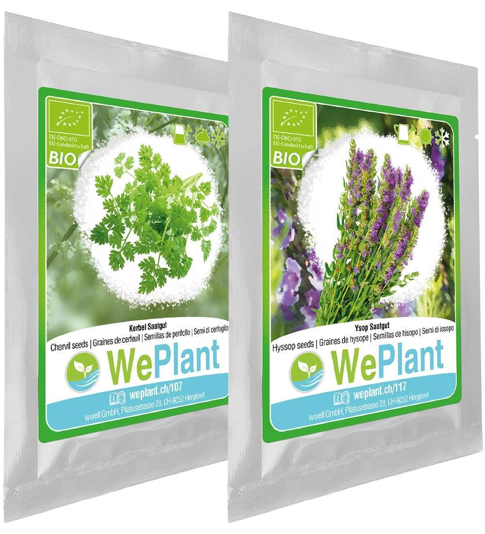 Graines de plantes aromatiques//Int/érieur /& Ext/érieur BIO Cerfeuil /& Hysope