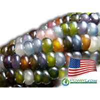 Glass Gem Corn - Rare Heirloom Variety (100+ Seeds) by PowerGrow (USA Grown)