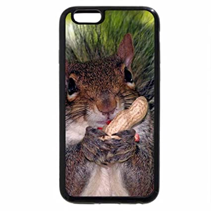 iphone 6s plus case iphone 6 plus case squirrel chewing his nutz