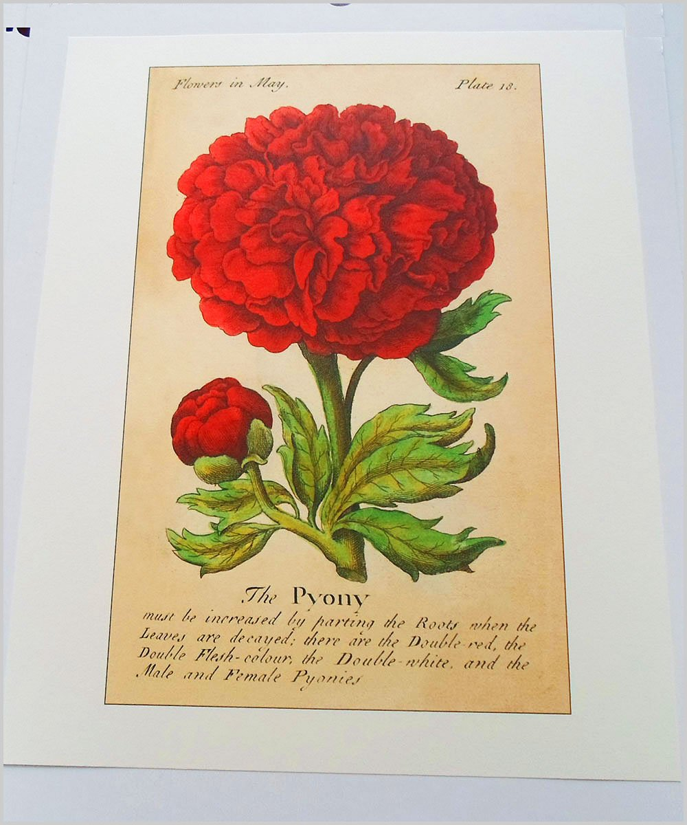 Amazon Botanical Print Reproduction The Compleat Florist