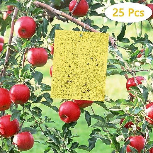 Fulfun Trampas Adhesivas de Doble Cara Amarillas, 25 Pegatinas de ...