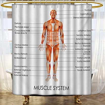 Human AnatomyShower Curtains FabricMuscle System Diagram Of Man Body Features Biological Elements