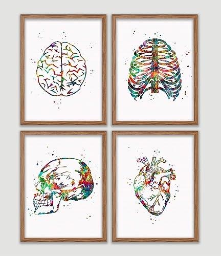 Amazon Com Human Anatomy Watercolor Poster Set Brain Rib Cage Heart