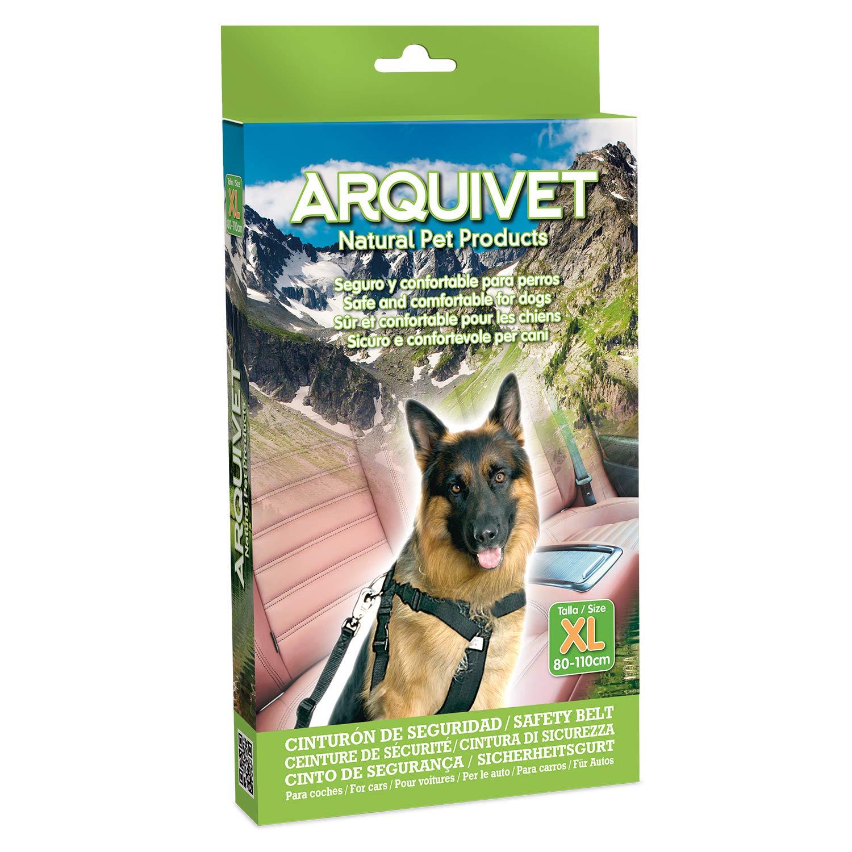 Arquivet 8435117812932 - Cinturón Seguridad teg 80: Amazon.es ...