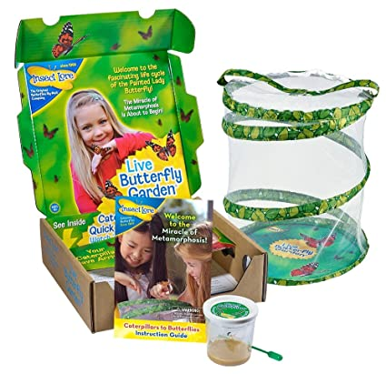 Amazon.com: Insect Lore Live Butterfly Growing Kit Toy - 5 ...