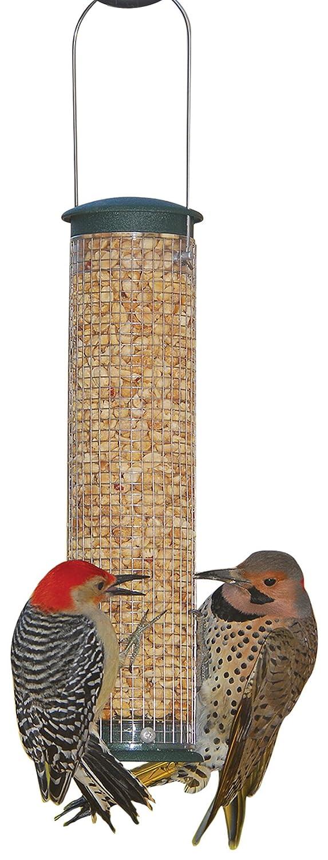 Aspetti Medium Peanut silo Spruce attraente strutturato finitura 1 1 4 quart Capacity