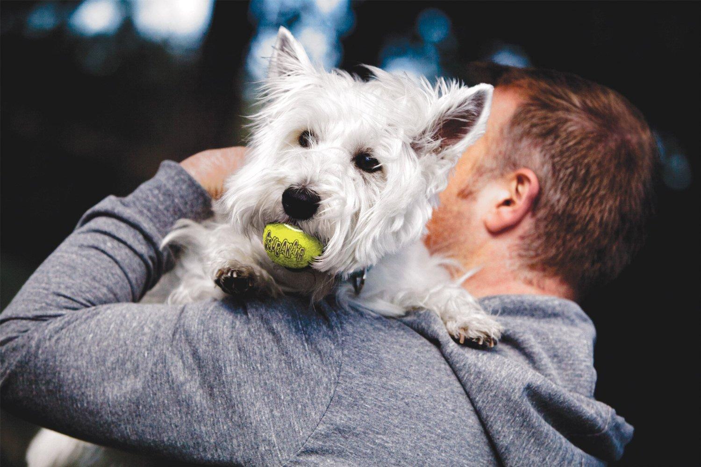 Kong Company - Juego de 48 pelotas de tenis para perros: Amazon.es ...