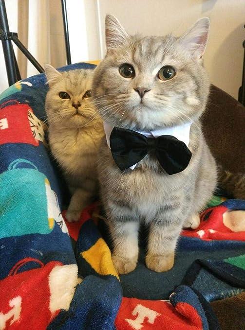 xiaoxiaoshen Mascotas Suministros para Gatos Gato Azul Muñeca ...