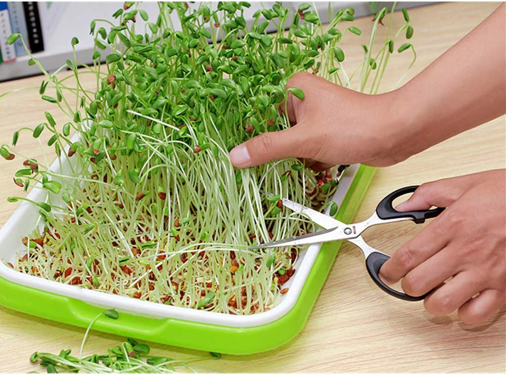 6 Pack Ymeibe Seed Sprouter Tray Seed Germination Tray with Drain Holes for Soil-Free Planting Seedlings Great for Home Garden Office