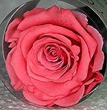 Eterna rosa, stabilizzata rosa Diametro 6,5 cm arancione