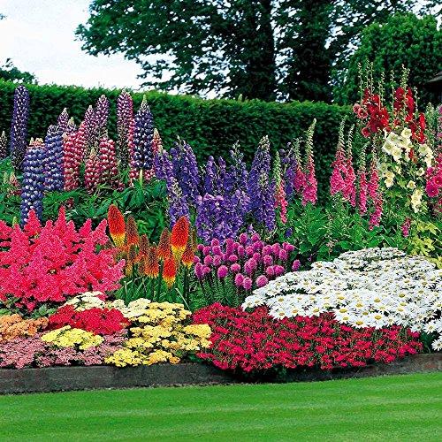 47 Pflanzen + 100 Blumenzwiebeln